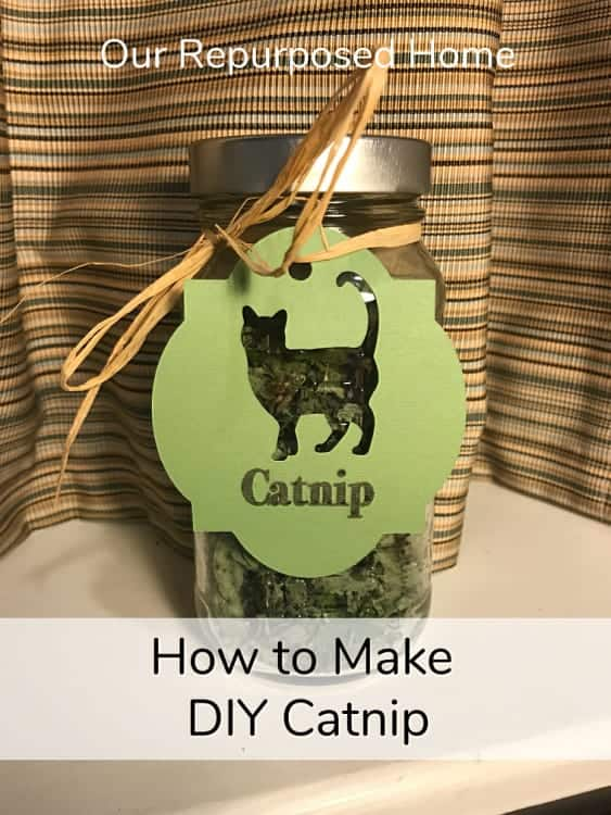 DIY Catnip (How to grow, dry, and store)
