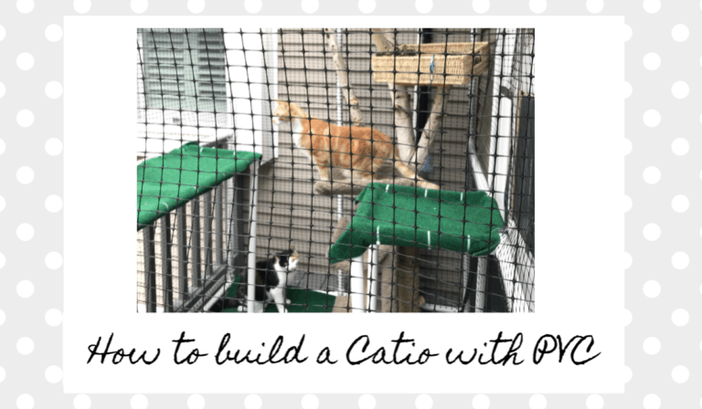 image of 2 cats playing inside a custom built catio or cat enclosure