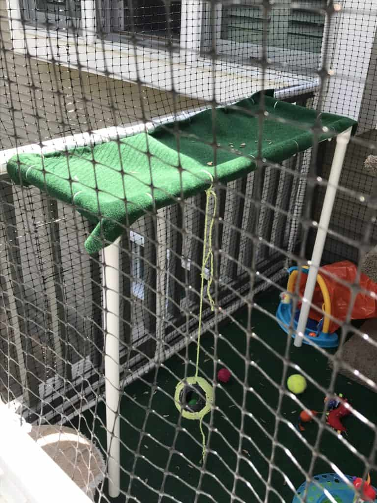 close up of a perch made from PVC pipes inside a custom catio or cat enclosure