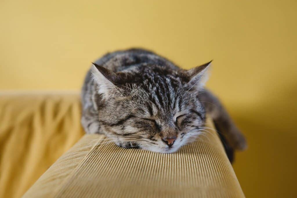 cute cat resting on back of sofa demonstrating cat friendly interior design ideas